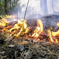 Пожар Митино