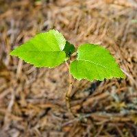В озеленении Митино смогут поучаствовать все желающие