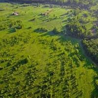 Urban Group благоустроит 10 га леса в рамках строительства ЖК «Митино О2»