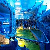 На территории комплекса «Крокус Сити» открылся «Крокус Сити Океанариума»