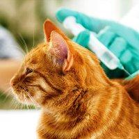 В Митино работает прививочный пункт для животных