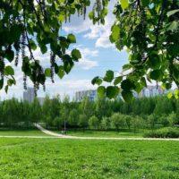 В ландшафтном парке «Митино» откроется детский лагерь